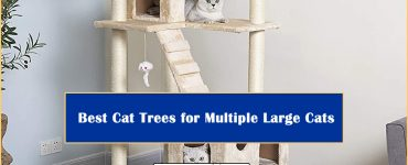 Best Cat Trees Multiple Large Cats