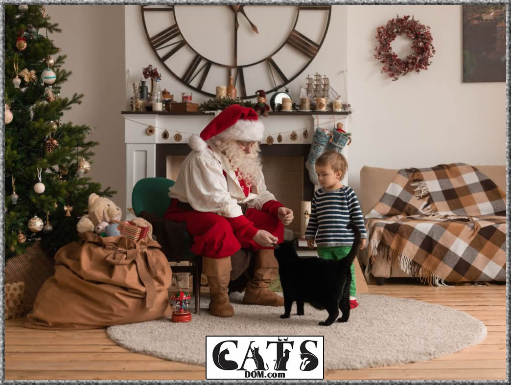 Best Christmas Gifts for Cat Lovers to buy this year Cat lovers desires and needs