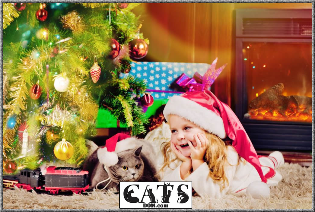 Best Christmas Gifts for Cat Lovers to buy this year Conclusion