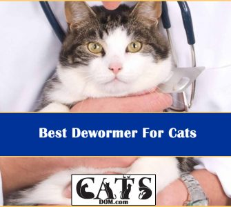 Best Dewormer For Cats