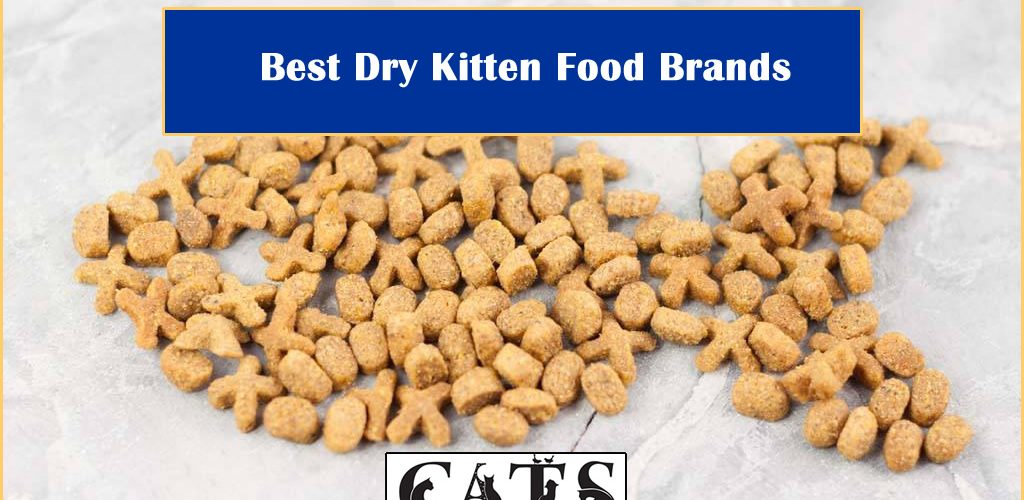 Best Dry Kitten Food Brands