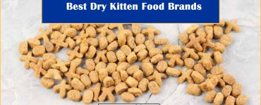 Best Dry Kitten Food Brands