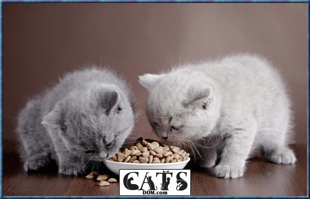Best Dry Kitten Food Brands You really would not wish to harm her with the hardest of meals