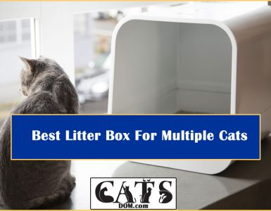Best Litter Box For Multiple Cats