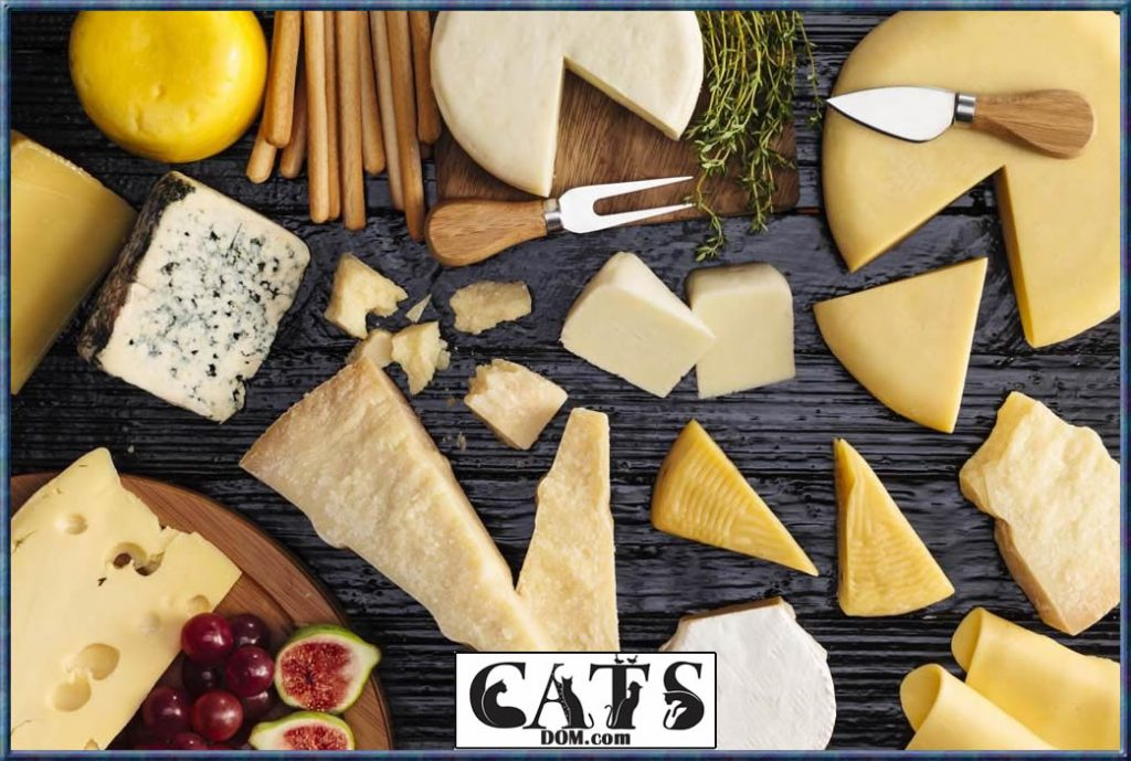 Can Cats Eat Pizza Everything you need to know Cheese Issues