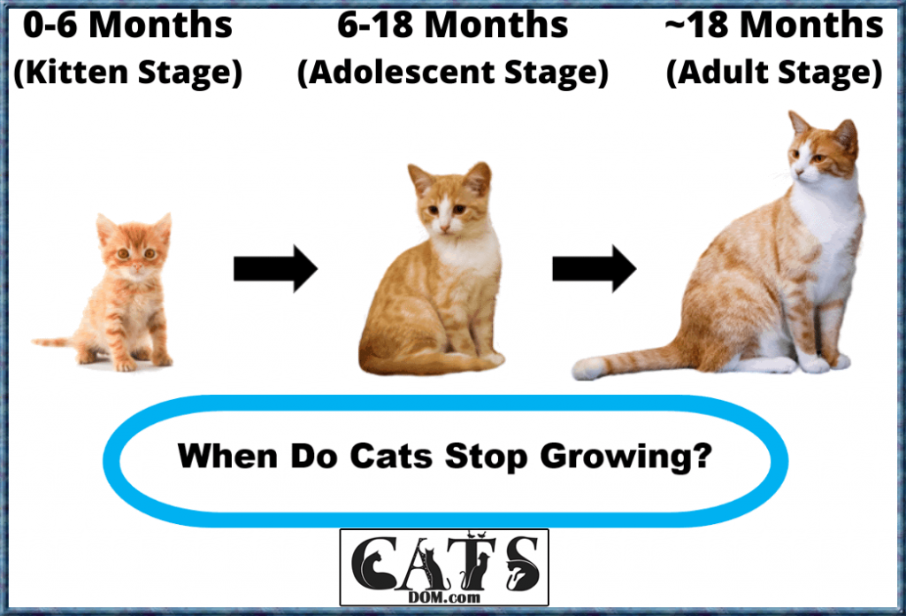 Cat Growth Stages