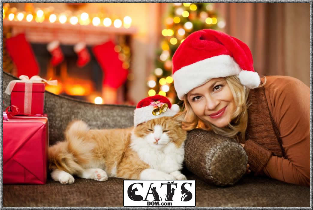 Christmas Gifts for Cat Lovers to buy this year Gender of the cat lover