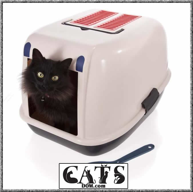 Factors worth considering while looking for the best litter box for multiple cats