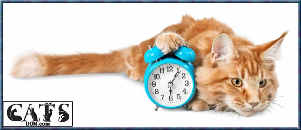 Find Out Why How Long Can a Cat Go Without Blinking