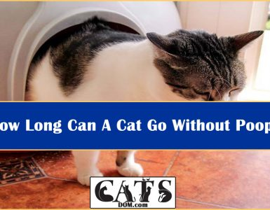 How Long Can A Cat Go Without Pooping?