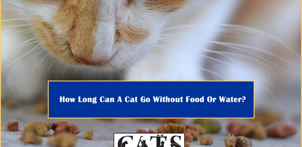 How Long Cat Without Food Water
