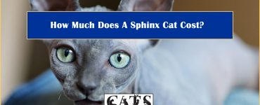 How Much Does A Sphinx Cat Cost?