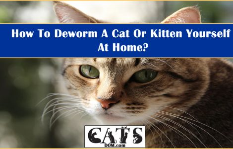 How To Deworm A Cat Or Kitten Yourself