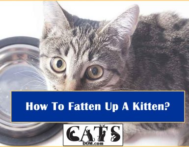 How To Fatten Up A Kitten?