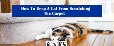 How To Keep Cat From Scratching Carpet