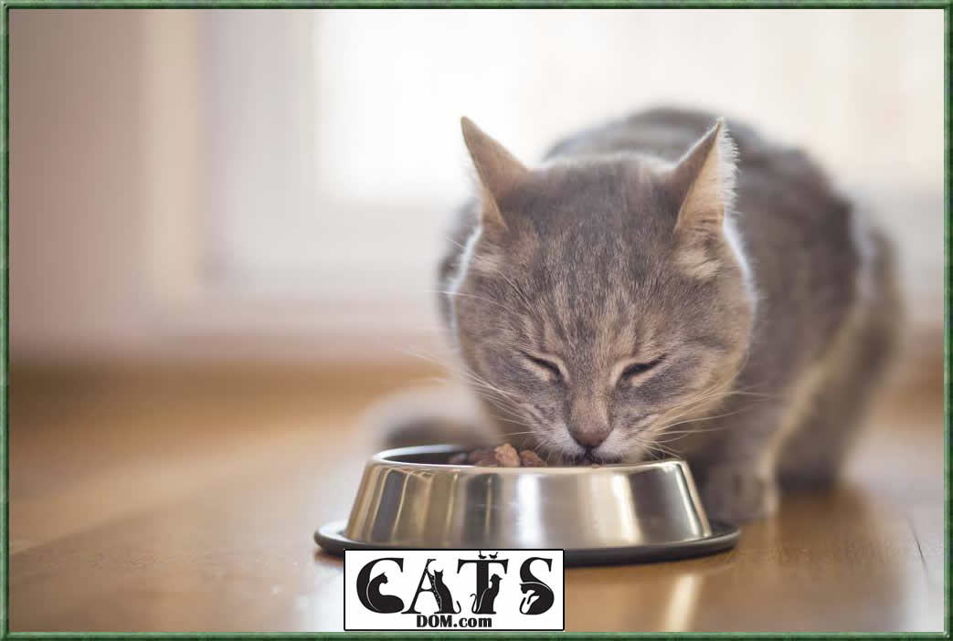 How long can a cat go without food or water Can cats do without food