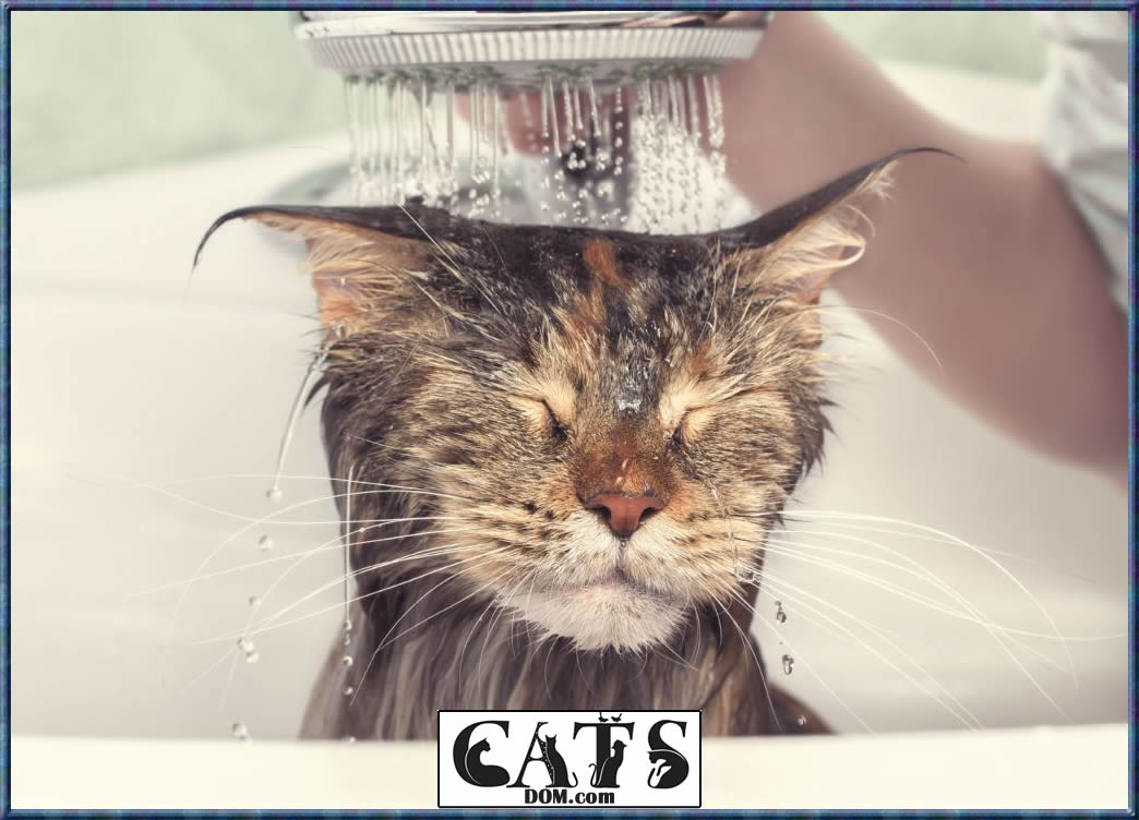 How to Get Wax Out of Cat Hair Bathe your cat with clean water