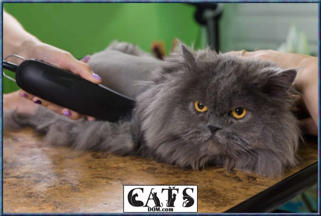 How to Get Wax Out of Cat Hair Dont hurt your cats delicate skin