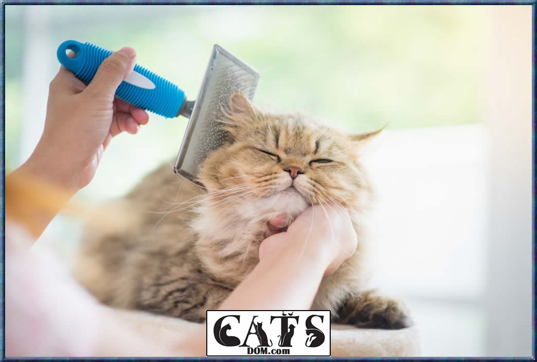 How to Get Wax Out of Cat Hair Getting wax out of your cats fur is time consuming