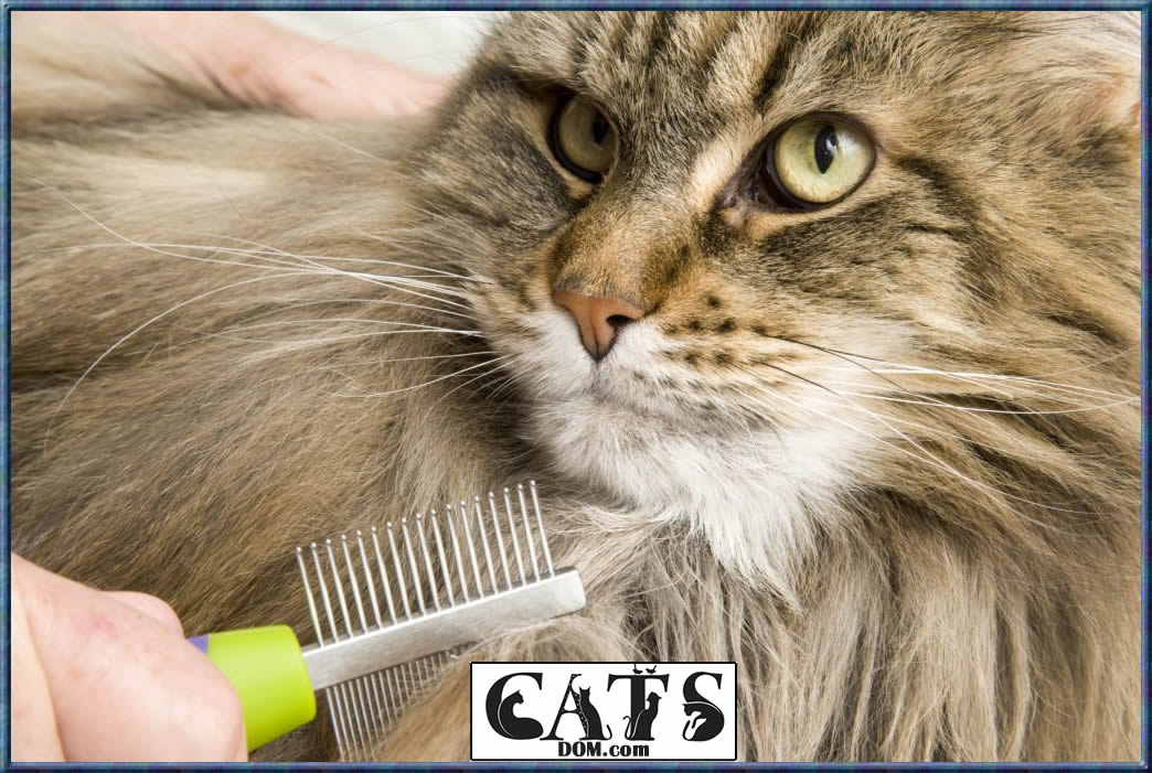 How to Get Wax Out of Cat Hair Using a wide toothed metallic grooming comb