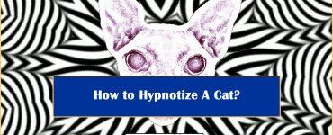How to Hypnotize Cat
