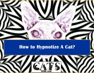 How to Hypnotize Cat