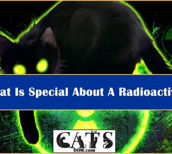 Radioactive Cat