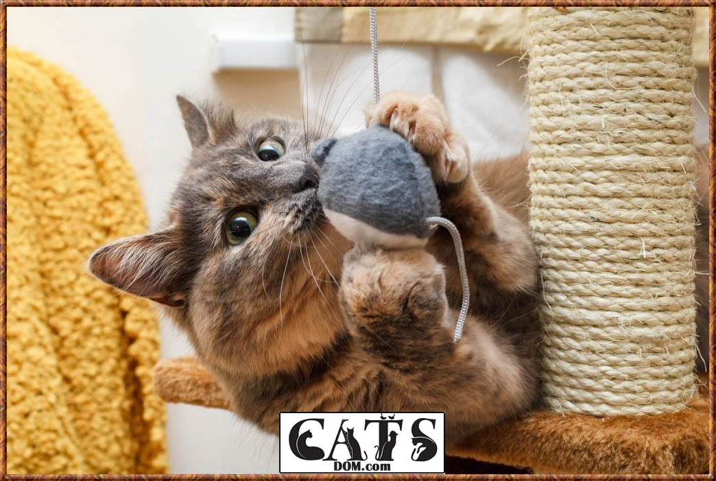 Train Your Cat to Use a Scratching Post Or Pad