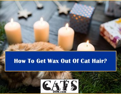 Wax Out Of Cat Hair