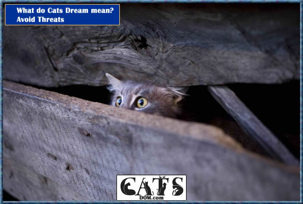 What do cat dreams mean Avoiding threats