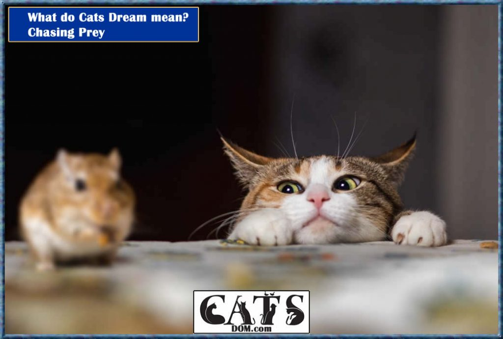 What do Cats Dream mean? Chasing Prey