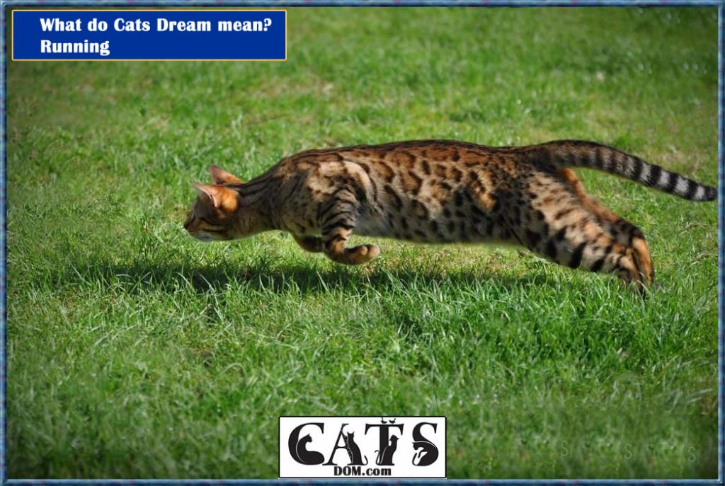What do Cats Dream mean? Running