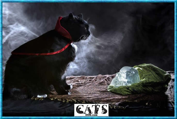 What is special about a radioactive cat2