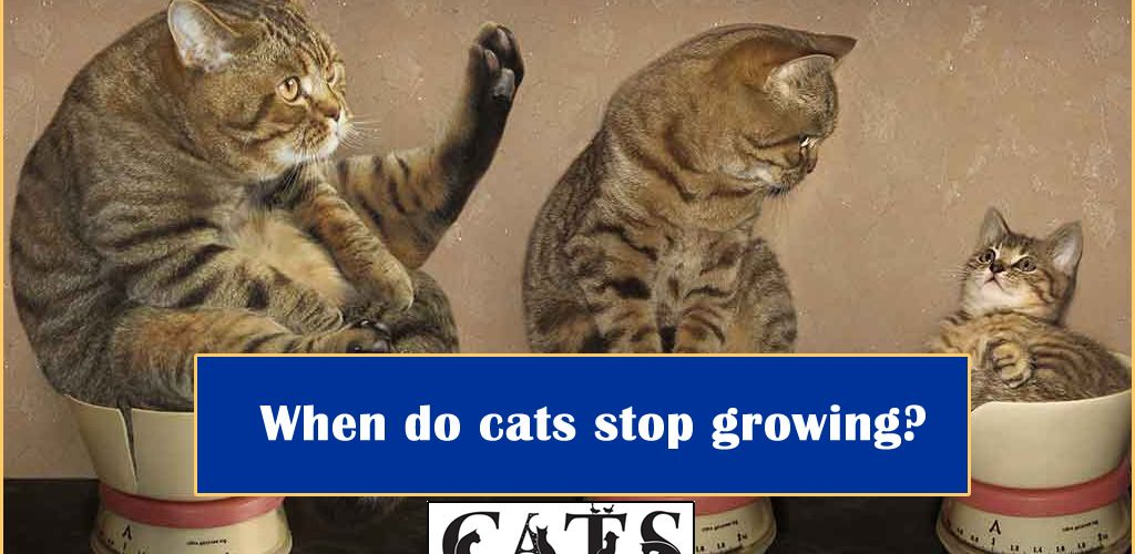 When do cats stop growing?