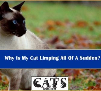Why Cat Limping