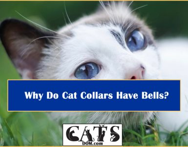 Why Do Cat Collars Have Bells