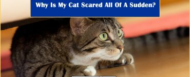 Why My Cat Scared