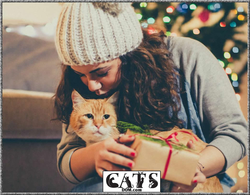 Why you need to gift a cat lover this Christmas