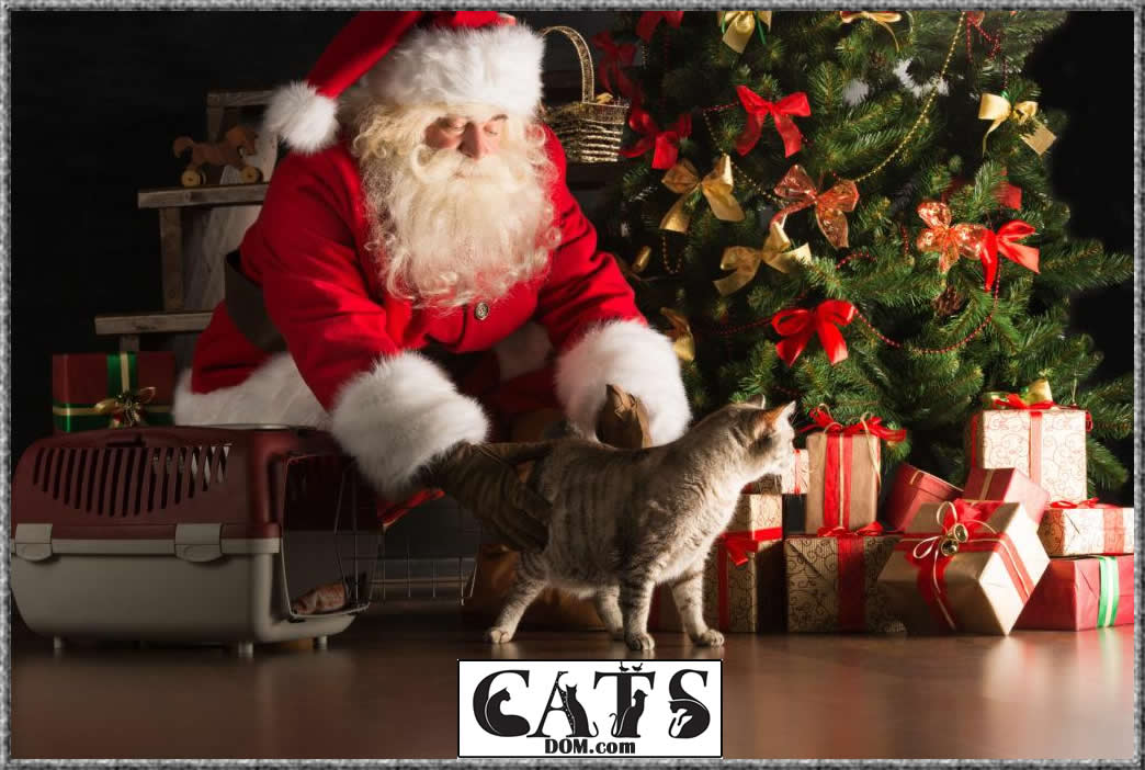 best Christmas gifts for cat lovers 1