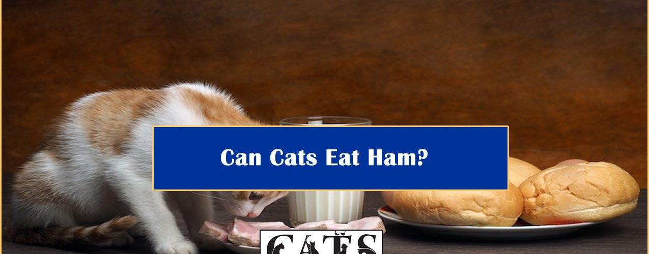 can-cats-eat-ham