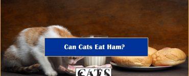 can-cats-eat-ham