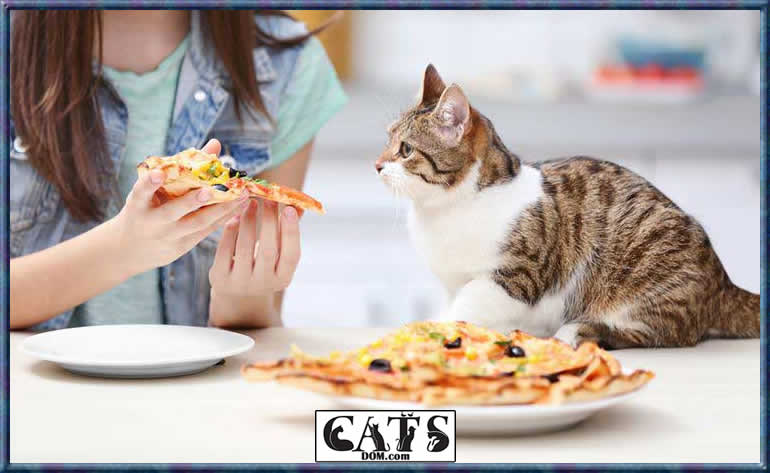 can cats eat pizza 1