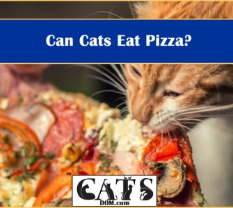 can cats eat pizza