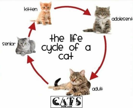 cats lifechanges