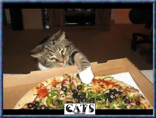 cats pizzz