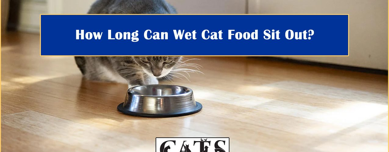 how long wet cat food sit out