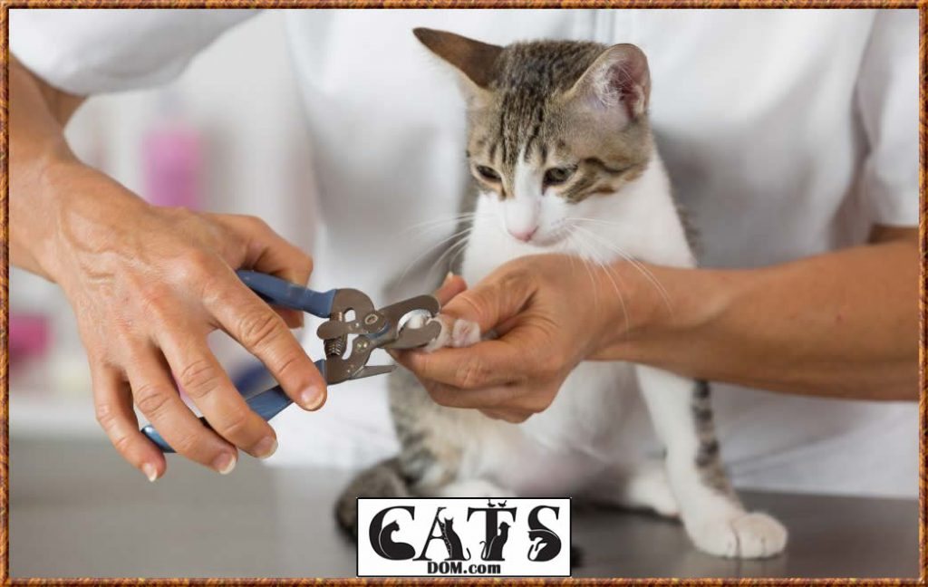 how to keep a cat from scratching the carpet under your door Trim Your Cats Nails