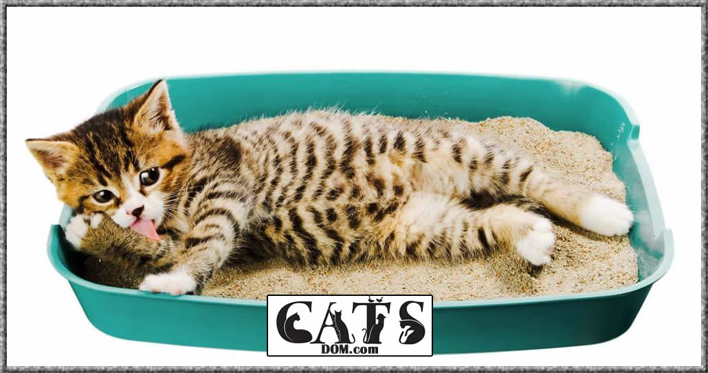 review of the best litter box for multiple cats to buy this year Conclusion