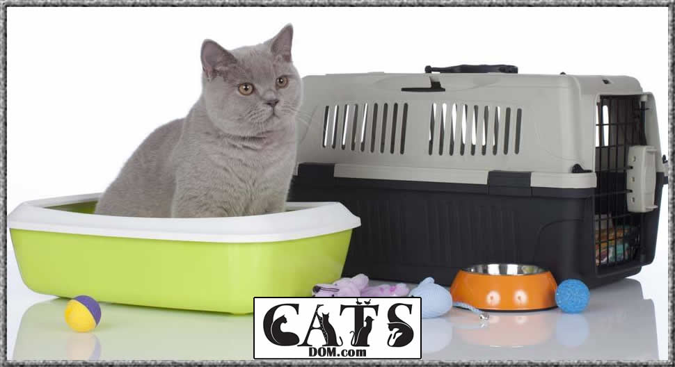 review of the best litter box for multiple cats