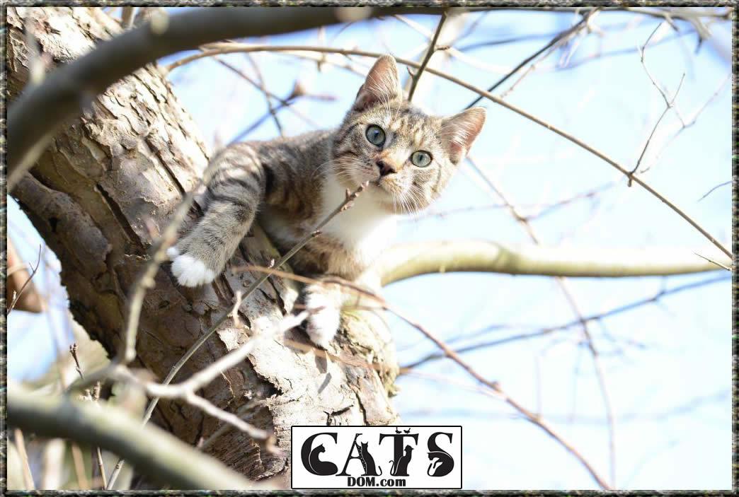 why do cat collars have bells To alert garden birds
